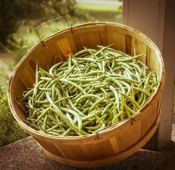 Haricots verts Saveurs & Couleurs
