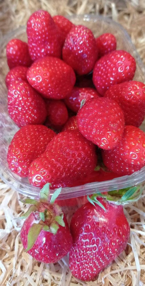 La fraise, le fruit du mois chez Saveurs et Couleurs, primeur à Talmont Saint Hilaire